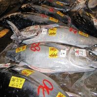 築地の市場で美味しい魚に出会う心意気をネタに込めて!