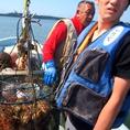 【圧倒的なこだわり】店長自らが漁に出て、鮮魚や牡蠣を仕入れることも!!