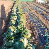 ◆◇畑から朝採れの新鮮野菜たち◆◇