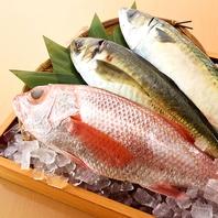 豊洲直送の新鮮鮮魚