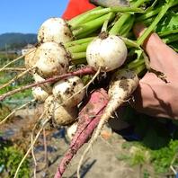 自家農園で獲れるこだわりの野菜たち