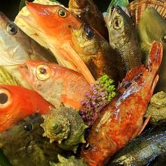 魚吟酒場の特集写真