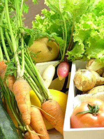 野菜ソムリエが育てた野菜や契約農家さんの朝採り野菜が『食べ放題』も♪
