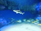 元気よく泳ぐサメたちを見ながらお食事を‥