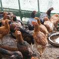 平飼い卵・北海地鶏など十勝清水の旭山学園
