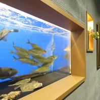 新鮮な活魚をお楽しみください!