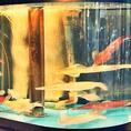 飯場丸のこだわりは全国から取り寄せた鮮度抜群の海鮮をお届けすること!長崎県五島列島や三河湾でとれた極上海鮮を、ぎりぎりまで鮮度を保った状態でお召し上がりいただけます!【名古屋/栄/居酒屋/個室/接待/宴会/海鮮/飲み放題/大人数/記念日/歓送迎会/名古屋飯】