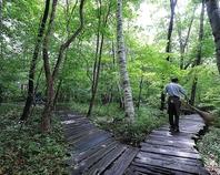 八ヶ岳倶楽部自慢の雑木林