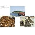 【わかめ】5月~6月は海藻類が旬で美味しい★