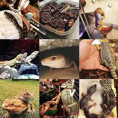 爬虫類カフェBAR 7STARの写真