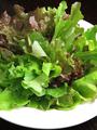 料理メニュー写真有機野菜のグリーンサラダ