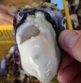 【契約している生産者の方々】安心・安全の検査済の牡蠣。ぷりぷり!