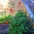 店舗前の花壇。今年も元気にオリーブ、バジル、スペアミント、ローズマリーなどなど無農薬で元気に育っています。お料理に沢山使用しますよ。
