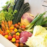 契約農家から直送の糸島野菜