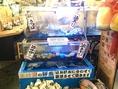 店内の生簀には活の貝類が並びます♪新鮮なまま卓上コンロであつあつをお召し上がり下さい☆