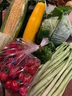 浜松産の新鮮な有機野菜を