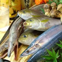 毎日仕入れる旬の鮮魚!