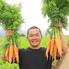 ルンゴカーニバル 野菜居酒屋 真狩村金丸農園直営のロゴ