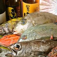 天然魚を安く仕入れています!