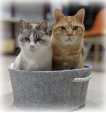 ハワイアン保護猫カフェ`Ohana
