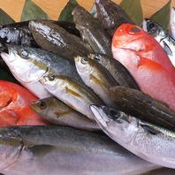 大好評!朝とれ鮮魚