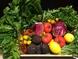水耕栽培で無農薬な新鮮野菜!