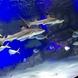優雅に泳ぐサメたち