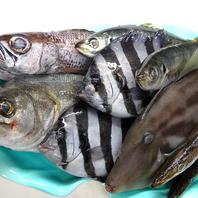 【相模湾の地魚】