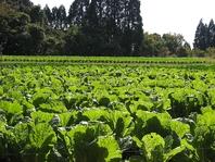 綾町から仕入れる新鮮有機野菜とお米を使用。