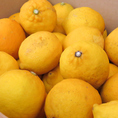 地物×「レモン!!」