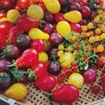 こちらは夏に入荷する彩り鮮やかなミニトマト♪他にも季節に合わせて見た目も味もおいしい野菜を厳選してお店で出します。月1で各生産者さんと直接会って素材のことも勉強しています。