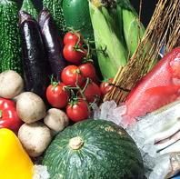 採れたてお野菜&新鮮魚介