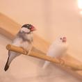 公園をイメージして造られた空間にある専用ケージにはインコや文鳥といったかわいらしい小鳥が放たれています♪ゆっくりとしたカフェタイム、女子会にご利用ください(#小鳥カフェ#小鳥カフェエルアンシエル#エルアンシエル)