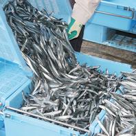 新鮮で良質な自慢の九州直送鮮魚
