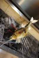 炭火で焼きの『焼き魚』、瀬戸内の新鮮な『鮮魚』