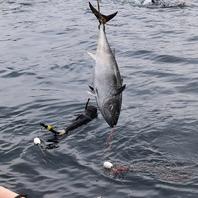 新鮮な魚は漁港に行って仕入れてます!!