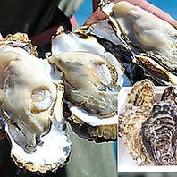 店主が厳選☆契約漁業者から直送の牡蠣をご提供!