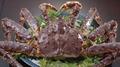 料理メニュー写真たらばガニの姿盛り(一尾・中)