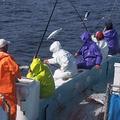 料理メニュー写真土佐の伝統漁法!かつおの一本釣り