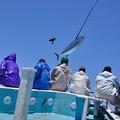 料理メニュー写真島の伝統を守る漁師。必要な分だけ釣り上げます!