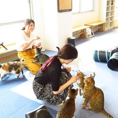 猫カフェ ルアナの雰囲気1