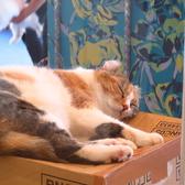 猫カフェ ルアナのおすすめ料理2
