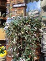 植物やお花に癒される