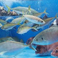 【上野駅から1分】福岡のお魚が泳ぎ回る店内の生簀!