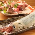 料理メニュー写真スルメイカ・アオリイカ・赤イカ(ケンサキイカ)・スミイカ・モンゴウイカ・ヤリイカ
