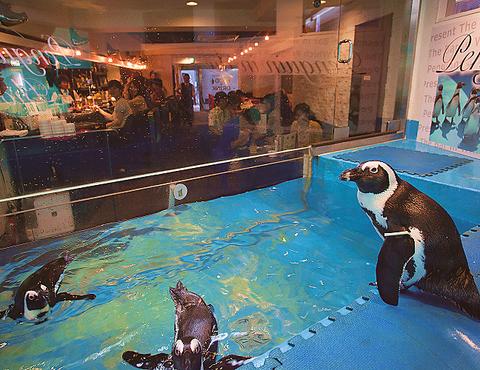 ペンギンと一緒に素敵な時間を過ごして。デート、女子会、歓送迎会、貸切も可!
