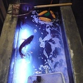 安芸灘から届いた魚が優雅に泳いでいます♪