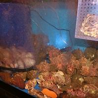 天然活け〆魚と活貝!!五島列島・北海道等全国各地♪