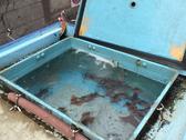 三崎港から直送される一本釣りのイカ