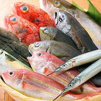 魚の魅力を改めて感じていただけます!